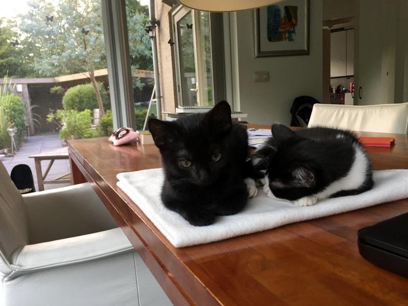 Een kat een kat noemen   Dwaalsporen