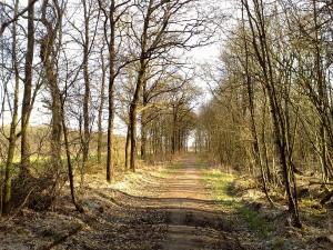 25 Bos nabij Wolvega